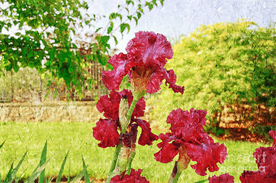Photograph - Red Iris Party Painterly by Andee Design