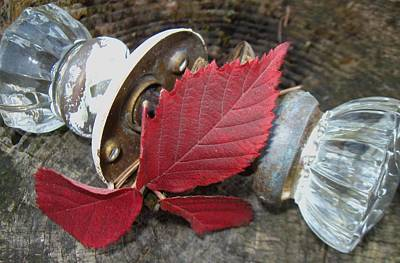 Photograph - Red Leaf And Glass Door Knobs by Todd Sherlock