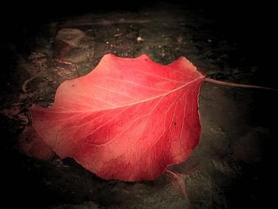 Red Leaf  Art Print by Beth Akerman