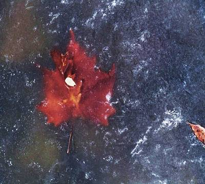 Red Leaf In Ice Art Print by Todd Sherlock