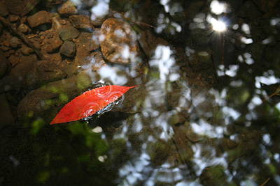 Photograph - Red Leaf In The Water by Jennifer Bright