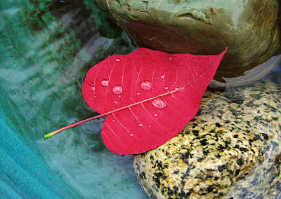 Photograph - Red Leaf Love by Ken Ketchum