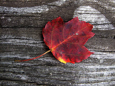 Photograph - Red Leaf Photograph by Kristen Fox
