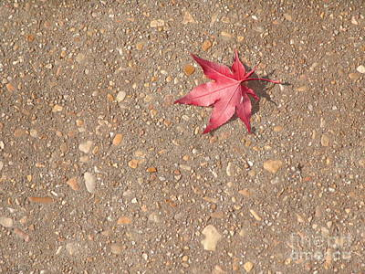 Photograph - Red Leaf by Rod Ismay