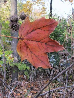 Photograph - Red Leaf by Todd Sherlock