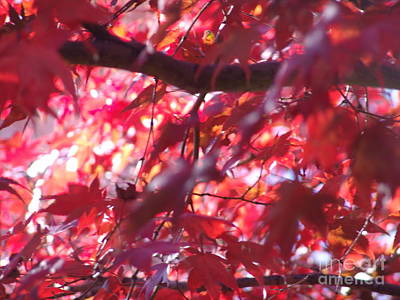 Photograph - Red Leaves 4 by Rod Ismay