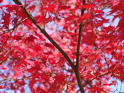 Photograph - Red Leaves And Branch by Rod Ismay