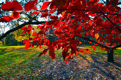 Photograph - Red Leaves by Dragan Kudjerski