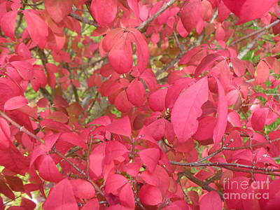 Red Leaves IIi Art Print by Alys Caviness-Gober