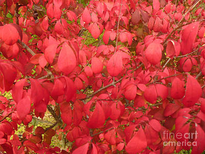 Red Leaves Iv Art Print by Alys Caviness-Gober