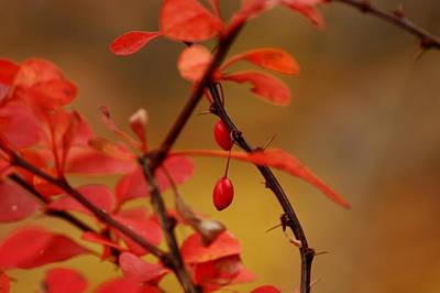 Light Photograph - Red Leaves Red Berries by LeeAnn McLaneGoetz McLaneGoetzStudioLLCcom