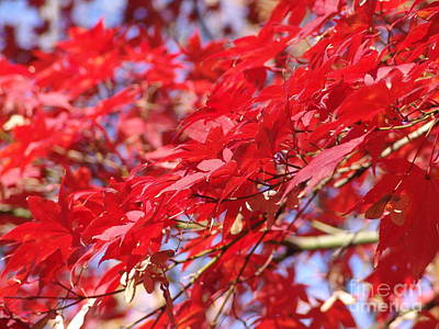 Photograph - Red Leaves by Rod Ismay
