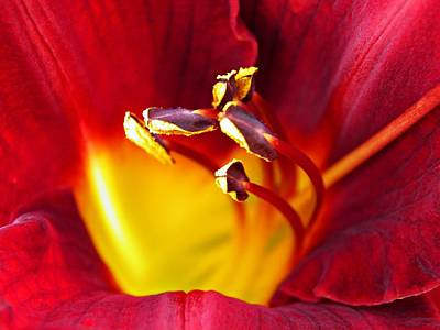 Photograph - Red Lily Center 2 by Sarah Loft