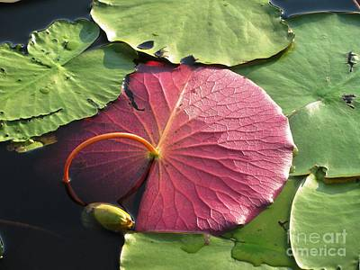 Red Lily Pad Art Print