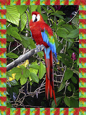 Macaw Digital Art - Red Macaw by Kurt Van Wagner