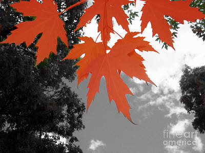 Photograph - Red Maple Leaves by Mary Mikawoz