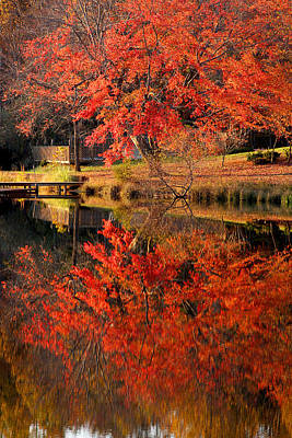 Photograph - Red Maple Reflection by Emanuel Tanjala