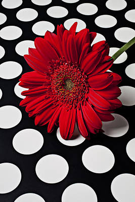 Red Mum With White Spots Art Print by Garry Gay