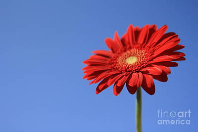 Nature Photograph - Red N Blue by Lee-Anne Rafferty-Evans