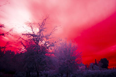 Red Art Print by Nicholas Evans