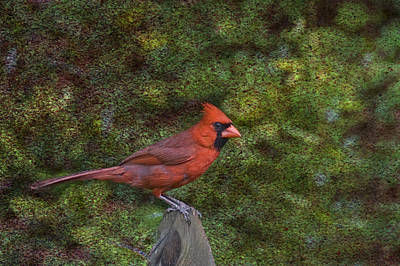 Photograph - Red On The Fence by Steven Richardson