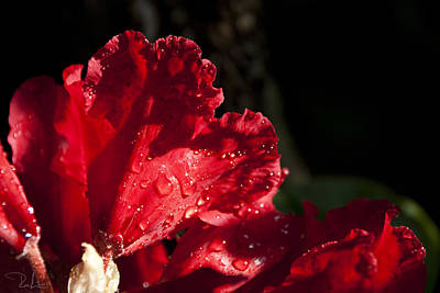 Photograph - Red Passion by Raffaella Lunelli