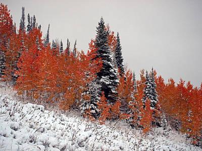 Photograph - Red Quakies In Snow by DeeLon Merritt