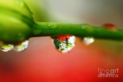Art Print featuring the photograph Red Raindrops by Yumi Johnson