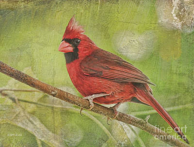 Cardinals. Wildlife. Nature Photograph - Red Red In The Tree by Deborah Benoit