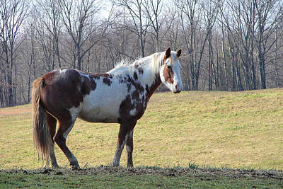 Chestnut Dun Horse Photograph - Red Roan by Brian Stevens