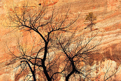 Red Rocks And Trees Art Print by Adam Pender