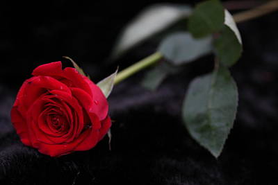 Photograph - Red Rose 2 by Sheila Kay McIntyre