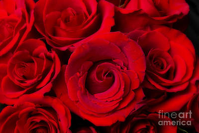 Photograph - Red Rose Bouquet Dream by James BO Insogna