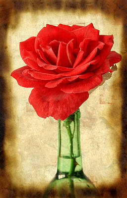 Antique Roses Vase Wall Art - Photograph - Red Rose by Darren Fisher