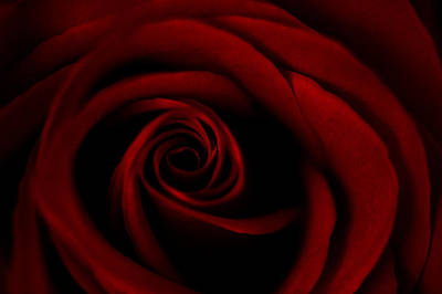 Photograph - Red Rose by Dorothy Cunningham