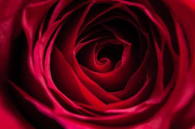 Art Print featuring the photograph Red Rose by Matt Malloy