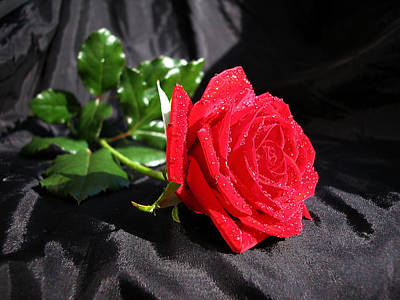 Red Rose On Black Art Print
