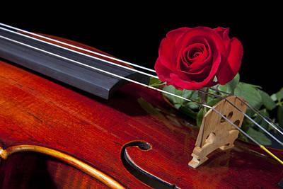 Photograph - Red Rose Violin Viola by M K Miller