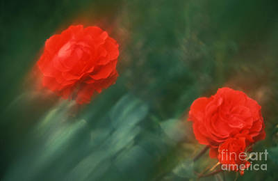 Photograph - Red Roses 55-43-s by Renata Ratajczyk