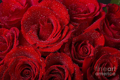Photograph - Red Roses And Water Drops by James BO Insogna
