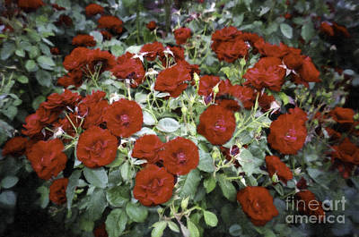 Photograph - Red Roses by Donna L Munro