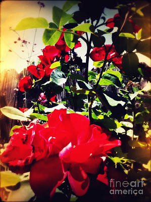 Print featuring the photograph Red Roses by Leslie Hunziker
