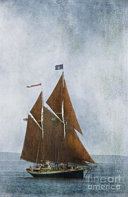 Photograph - Red Sails by Alana Ranney