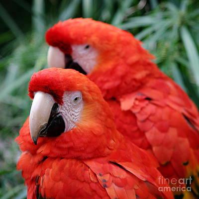 Colourfull Photograph - Red Scarlet Macaw by Henrik Lehnerer