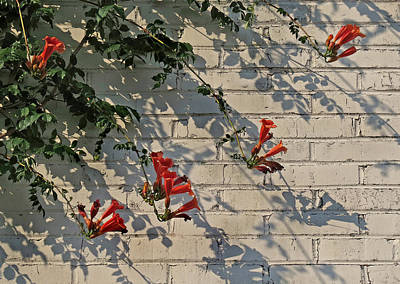 Art Print featuring the photograph Red Summer Trumpets by Deborah Smith