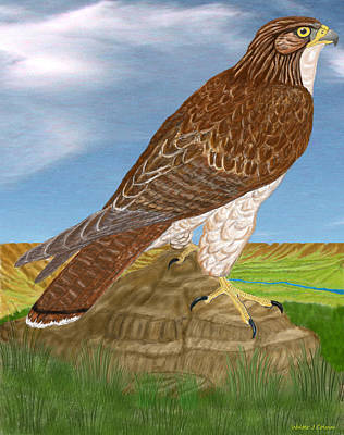 Digital Art - Red Tail Hawk by Walter Colvin
