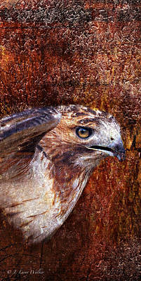 Hawk Digital Art - Red-tailed Hawk by J Larry Walker