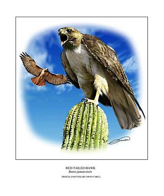 Red Tail Hawk Digital Art - Red Tailed Hawk by Owen Bell