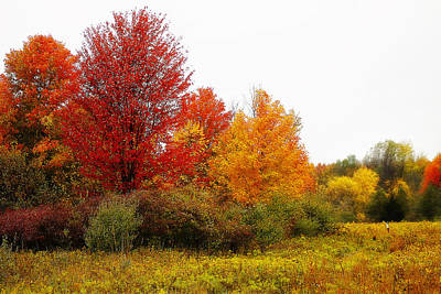 Photograph - Red Tree by Scott Hovind