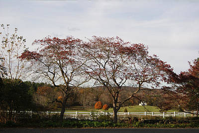 Photograph - Red Trees And Green Pastures by Margie Avellino